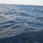 11月26日 深海 20.4℃、アコウ47~66㎝1人1~14匹@アコウ花1回、キンメ31~40cm1人5~15匹、@後半釣果が伸びた。