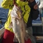 11月20日、ルアー(中深海ジギング)アラ86~89cm1人0~2匹、マダイ、メバルやクロムツ37~55㎝1人1~4匹、カサゴ、キンメ、サバ、ヤリイカ、スルメイカなどゲット