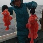 4月20日、深海乗合、朝方少しキンメを狙い、のち移動してアコウ狙い、キンメ中小型混ざり1人41~80匹、アコウ混ざり、クロムツ、カサゴなど
